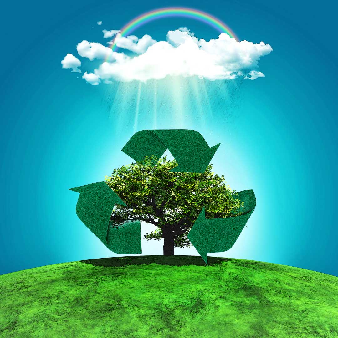 Por-qué-es-importante-sembrar-árboles